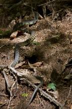 Serpiente durante el camino